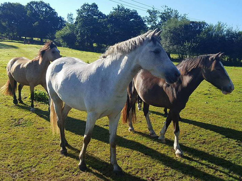 Horses Of Bhf Lscape5